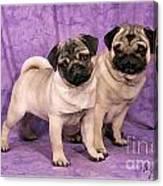 A Pug And A Pug Canvas Print
