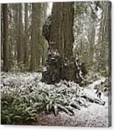 A Rare Snow Dusts The Trail Through Del Canvas Print