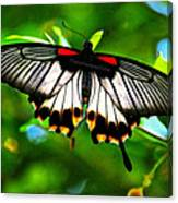 A Real Beauty Butterfly Canvas Print
