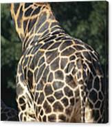 A Rear View Of A Rothschild Giraffe Canvas Print