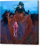 A Red Sea Fan With Sponge Colored Clam Canvas Print
