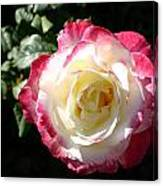 A Rose From Tyler Canvas Print