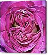 A Rose Is A Rose ... Canvas Print