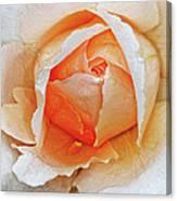 A Roses Tear Canvas Print