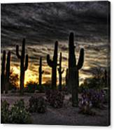 A Saguaro Sunrise  Canvas Print