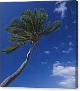 A Scenic View Of A Palm Tree Canvas Print
