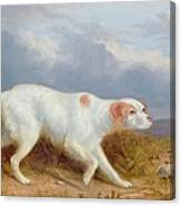 A Setter On The Moor Canvas Print