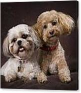 A Shihtzu And A Poodle On A Brown Canvas Print