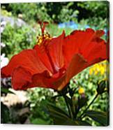 A Side Of Hibiscus Canvas Print