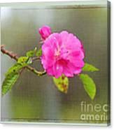 A Single Rose Canvas Print