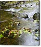 A Small Dam Of Golden Leaves  Canvas Print