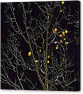 A Small Number Of Leaves Still Cling Canvas Print