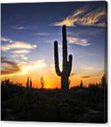 A Sonoran Sunset  Canvas Print