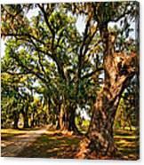 A Southern Stroll Canvas Print
