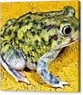 A Spadefoot Toad Canvas Print