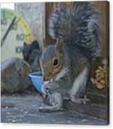 A Squirrel In 55 Degree Weather Canvas Print