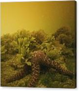 A Starfish In Waters Clouded By A Red Canvas Print
