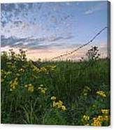 A Summer Evening Sky With Yellow Tansy Canvas Print