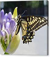A Swallowtail Butterfly Canvas Print