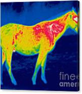A Thermogram Of A Horse Canvas Print