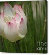 A Touch Of Blush Canvas Print