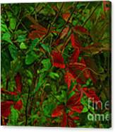 A Touch Of Christmas In Nature Canvas Print