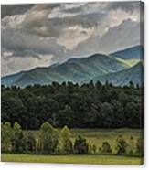 A Touch Of Sunshine Canvas Print