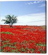 A Tree In A Red Sea Canvas Print