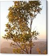 A Tree Outlined By The Rays Of The Setting Sun At Pachmarhi Canvas Print