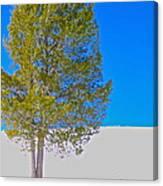 A Trees Shadow Canvas Print