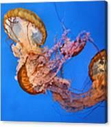 A Trio Of Jellyfish Canvas Print