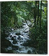 A View Of A Tropical Stream In El Canvas Print