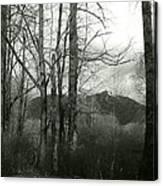 A View Through The Trees Bw Canvas Print
