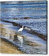 A Visit To The Beach Canvas Print