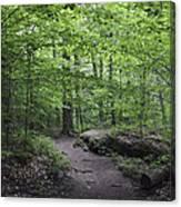 A Walk In The Catskills Canvas Print
