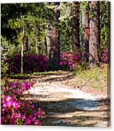 A Walk In The Springtime Woods Canvas Print
