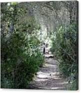a walk about fairy wood - Mediterranean autumn forest Canvas Print