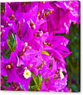 A Wall Of Flowers Canvas Print
