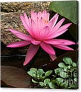 A Waterlily's Grace Canvas Print