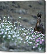 A Wild Horse On A Wildflower Covered Canvas Print