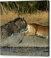 A Wildebeest And A Red Lechwe Leap Canvas Print