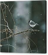 A Willow Tit Parus Montanus Perches Canvas Print
