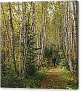 A Woman Walks Down A Birch Tree-lined Canvas Print