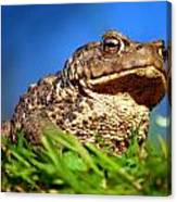 A Worm's Eye View Canvas Print