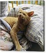 A Yawning Cat Wakes From A Nap Canvas Print