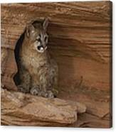 A Young Mountain Lion Rests In A Rocky Canvas Print