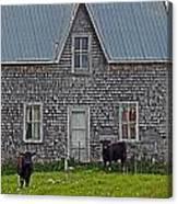 Abandoned Cow House - Barrow Bay Canvas Print