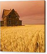 Abandoned Farm House, Wind-blown Durum Canvas Print