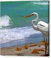 Absorbed In Long Boat Key Canvas Print