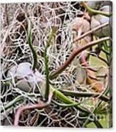 Abstract Caput Medusae Canvas Print
